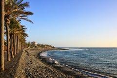 Palmiers sur le bord de mer, Las Amériques, Tenerife Photographie stock libre de droits
