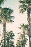 Palmiers sur le boulevard de bord de la mer Photographie stock
