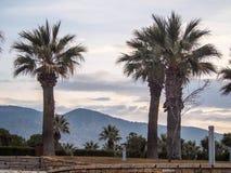 Palmiers sur le dessus de la colline Photos libres de droits
