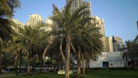 Palmiers sur le fond de la ville clips vidéos