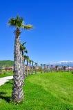 Palmiers sur le fond des montagnes neigeuses dans le secteur d'Adler de Sotchi Image stock