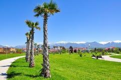 Palmiers sur le fond des montagnes neigeuses dans le secteur d'Adler de Sotchi Photos stock