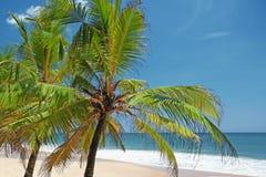 Palmiers sur le rivage Image stock