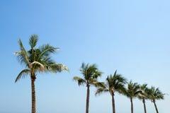 Palmiers sur un fond d'un ciel bleu Images stock