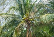 Palmiers sur un fond de ciel Image stock