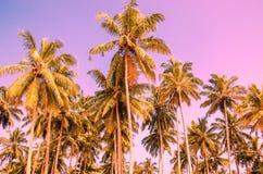 Palmiers sur un fond de ciel pourpre images libres de droits