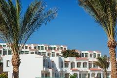 Palmiers sur un fond de l'hôtel égyptien Image libre de droits