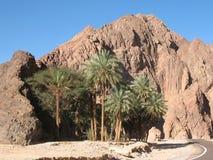 Palmiers sur un fond des montagnes Photo stock