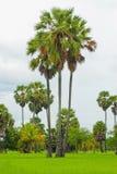 Palmiers sur un gisement vert de riz Photos libres de droits
