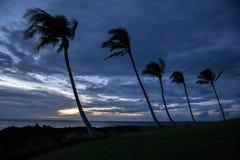 Palmiers sur un rivage de la grande île, Hawaï au coucher du soleil image libre de droits