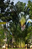 Palmiers sur une île - Ko Chang, Thaïlande, avril 2018 - après-midi photographie stock libre de droits