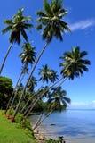 Palmiers sur une plage, île de Vanua Levu, Fidji Image libre de droits