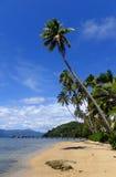 Palmiers sur une plage, île de Vanua Levu, Fidji Photos stock