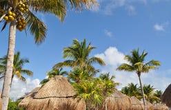 Palmiers sur une plage Photo libre de droits