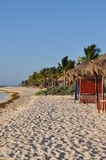 Palmiers sur une plage Photos libres de droits