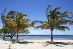 Palmiers sur une plage images stock