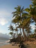 Palmiers sur une plage hawaïenne Photographie stock libre de droits