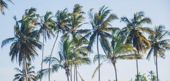 Palmiers sur Zanzibar tanzania photo libre de droits