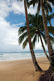 Palmiers tropicaux Photo libre de droits