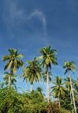 Palmiers tropicaux Photographie stock libre de droits