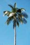Palmiers tropicaux Photo stock