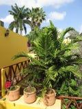 Palmiers tropicaux d'hôtel en Merida Yucatan Mexico Photographie stock