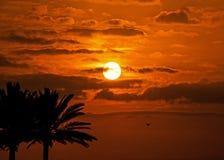 Palmiers tropicaux de ciel de coucher du soleil photographie stock libre de droits