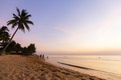Palmiers tropicaux de coucher du soleil de plage de paradis Photo stock