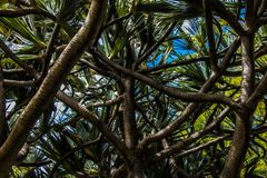 Palmiers tropicaux en île tropicale photographie stock