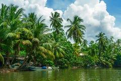 Palmiers tropicaux sur la berge Images stock