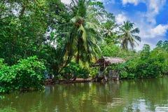 Palmiers tropicaux sur la berge Image stock