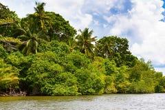 Palmiers tropicaux sur la berge Photos libres de droits