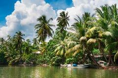 Palmiers tropicaux sur la rive Images libres de droits