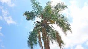 Palmiers un jour ensoleillé avec le ciel bleu clair au printemps photo stock