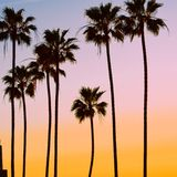 Palmifornia Royalty Free Stock Images