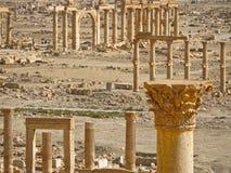 Palmira Fotografia Stock