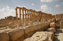 Palmira, Syria. Ruins of an old city. II thousand years BC. The Pearl of Syria. The city is constructed by the Roman empire Stock Image