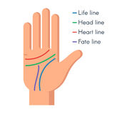 Palmistry Human hand. Palmistry concept. Human hand, the value of the lines on the palm. Vector flat illustration  on white background Stock Photo