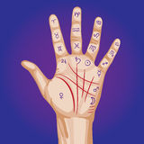 Palmistry map on open palm. Illustration Stock Photo