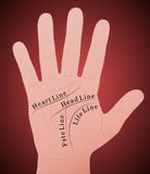 Palmistry Right Hand Main Lines. Palmistry - Right hand with the four main lines and their names. Vector illustration on red gradient background Royalty Free Stock Images