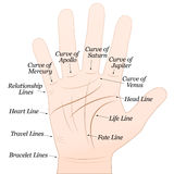 Palmistry Right Hand White. Palmistry - Right hand with lines and their names. Vector illustration on white background Royalty Free Stock Photo