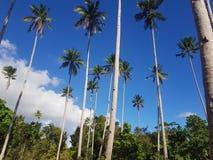 Palmkokospalmen in Gr Nido Palawan royalty-vrije stock foto