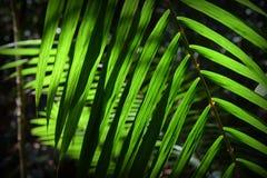 Palmleavesbakgrund arkivfoton