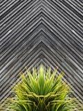 Palmlilja- eller kaktusväxtabstrakt begrepp med diagonala plankor av trä i t royaltyfri bild