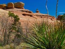 Palmlilja i kanjon för jäkel` s nära Fruita Royaltyfri Fotografi