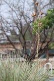 Palmliljaväxt i gård Royaltyfri Fotografi
