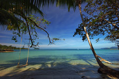 Palmns on the beach. Photographed on the beach of Koh Chang island. Thailand Stock Images