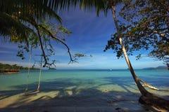 Palmns en la playa Imagenes de archivo