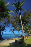 Palmns sulla spiaggia Fotografia Stock