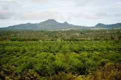 Palmolieaanplanting Stock Foto